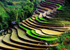rice_field_in_sapa